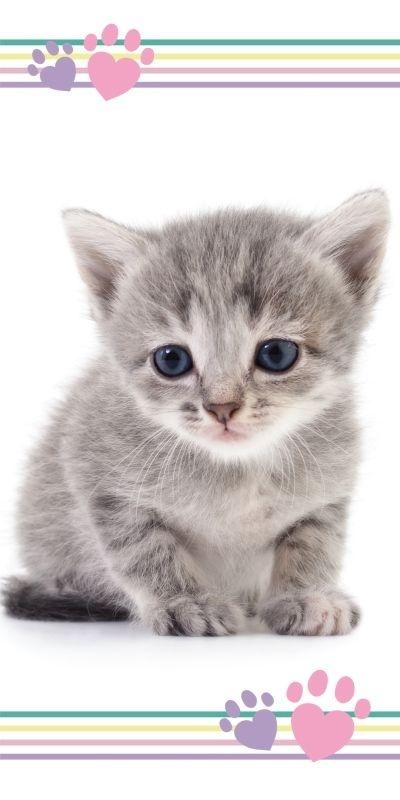 JERRY FABRICS Osuška Kitten colour  Bavlna - Froté, 70/140 cm